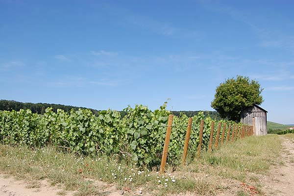 Viticulture durable HVE